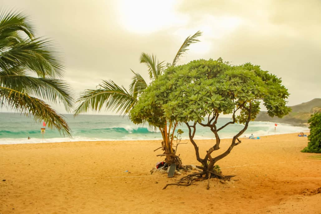 Beach Trees On North Shore Beach