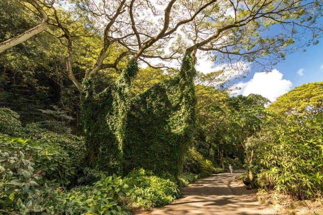 Waimea Valley Walkway
