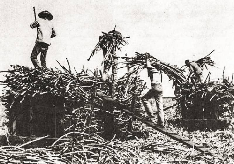 Chinese contract laborers on a sugar plantation in th century HawaiiStateArchivesimage