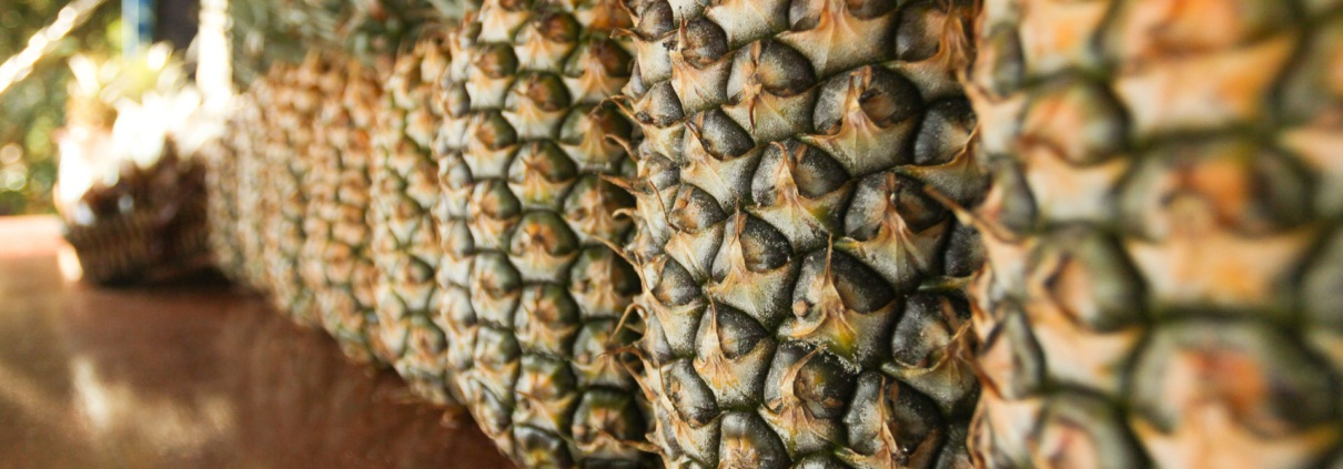 Pineapple Lineup at Hawaii Fruit Stand