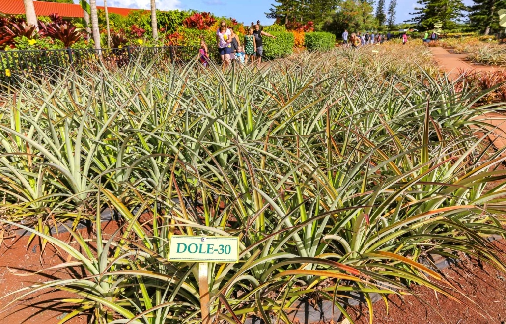 Dole PineappleFieldSign