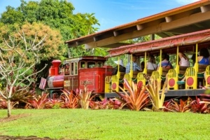 Hawaii Best Tour Dole Plantation