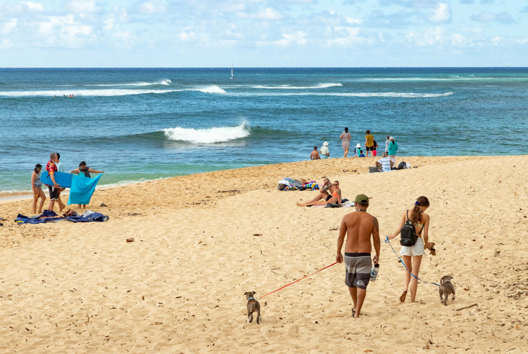 Sunset Beach and Dogs North Shore Oahu